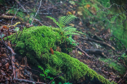 Parque Natural de #Gorbeia #DePaseoConLarri #Flickr - -854
