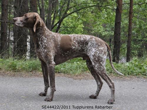 SE44422/2011 Tupplurens Rabarber