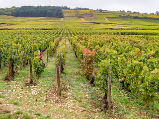 Weinlagen an der Route des Grand Crus