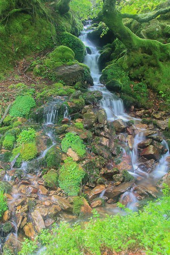 Parque Natural de #Gorbeia #DePaseoConLarri #Flickr - -921