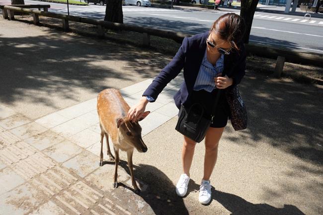 nara deer park 3