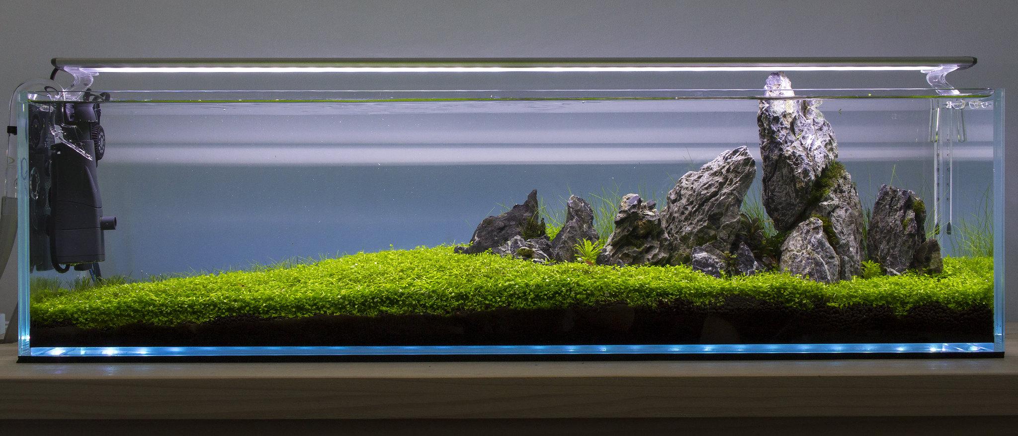 3ft Bookshelf Aquarium Aquascape By Colm Doyle On Flickr