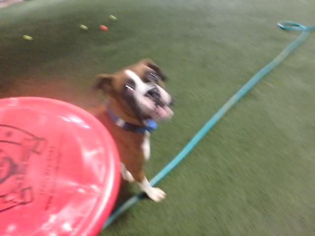 09/28/16 Frisbee Play!!