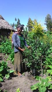 Apple sapling managed by women