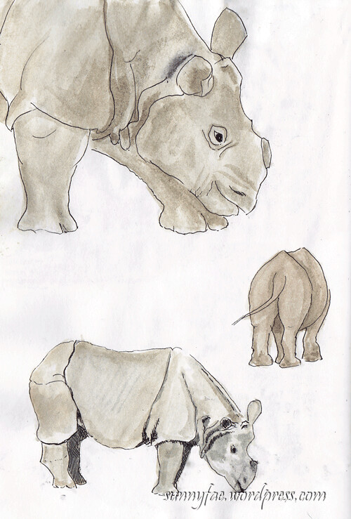 rhino-sketch