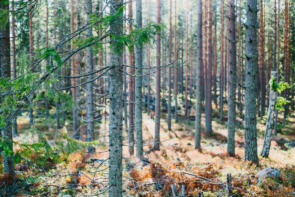 Sensommarskog - Evelinas Ekologiska