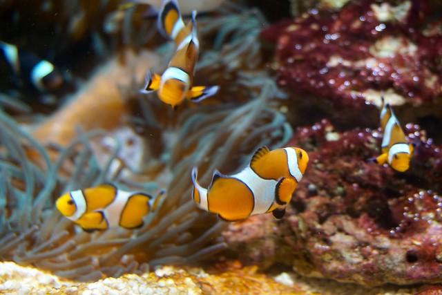 okeanarium5