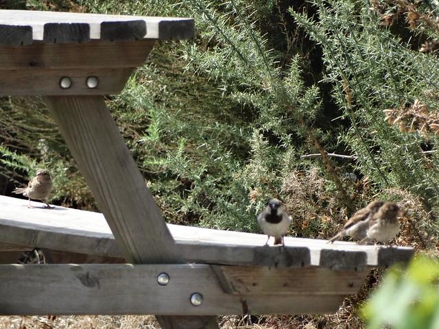 Aves en las Brañas de Valga en Visantoña en Mesía