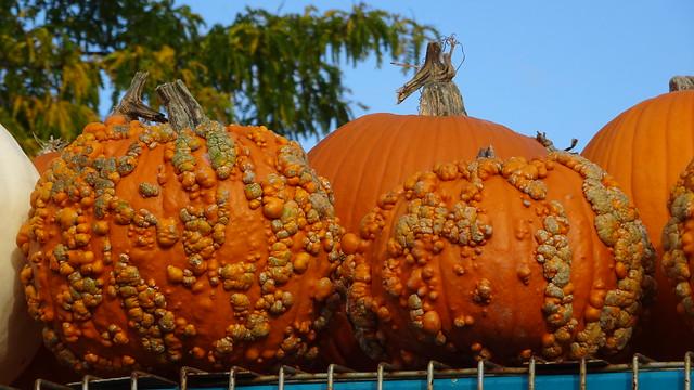Odd Pumpkins