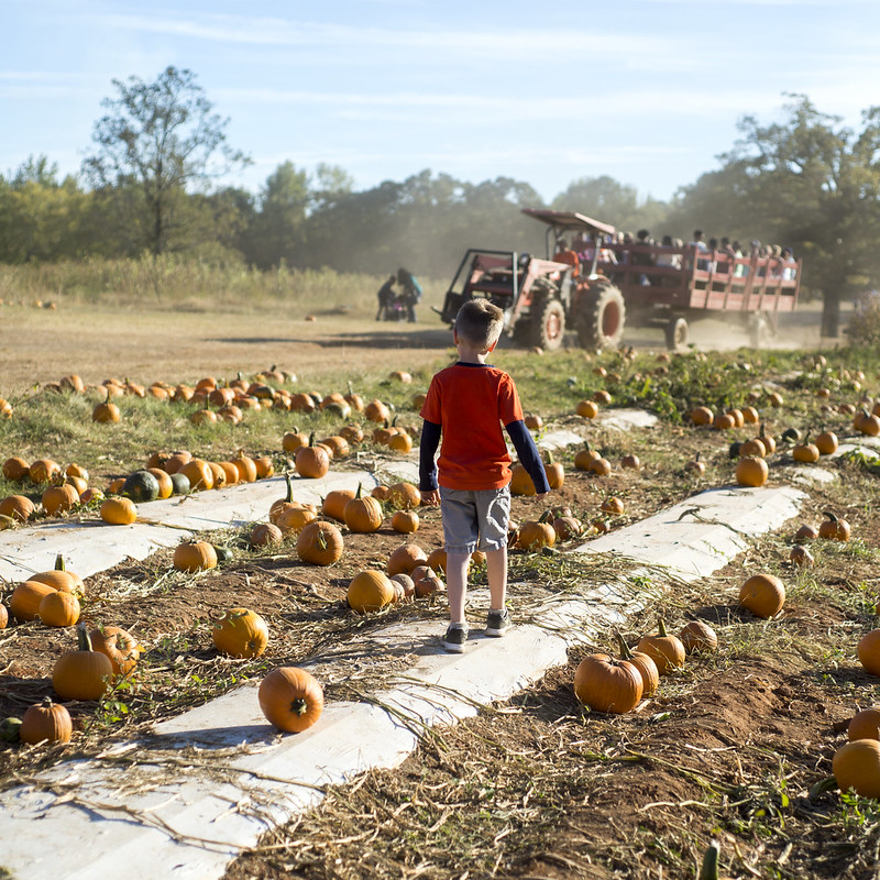 PumpkinPatch2016_10