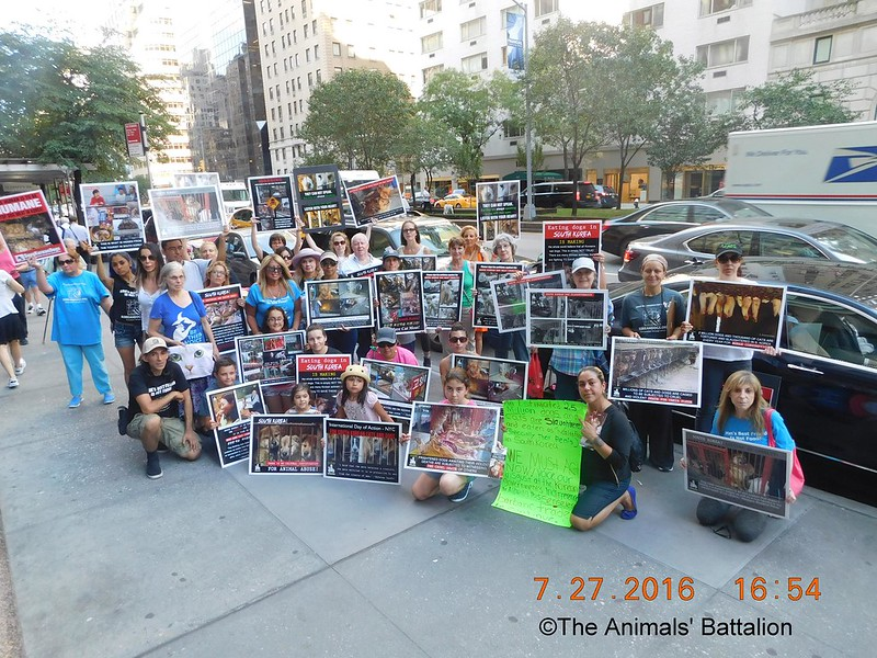New York, South Korean Consulate General, International Day of Action for South Korean Dogs and Cats (Day 2) – July 27, 2016 Organized by The Animals' Battalion