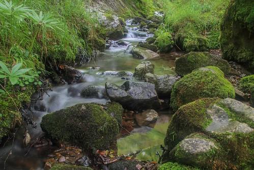 Parque Natural de #Gorbeia #DePaseoConLarri #Flickr - -906