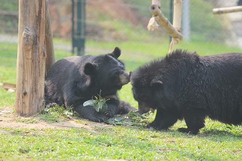 Mara (left) playing with Mausi (right) in their enclosure, VBRC