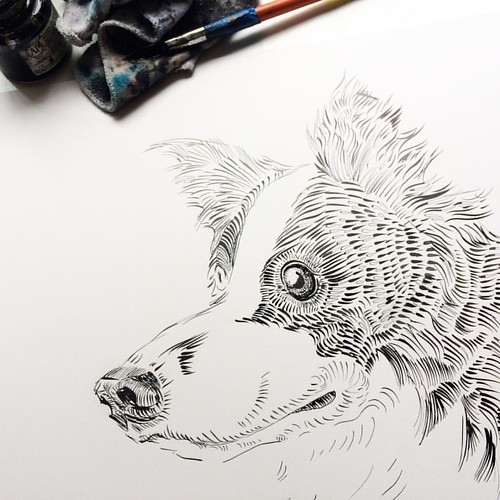 My dog portraits project update: I'm working on a portrait of a  border collie (his name was Turbo and I followed his adventures at @geninne ) #progress #project #showyourwork #turbo #dog #dogs #portrait #bordercollie #collie #border #ink #blackandwhite #