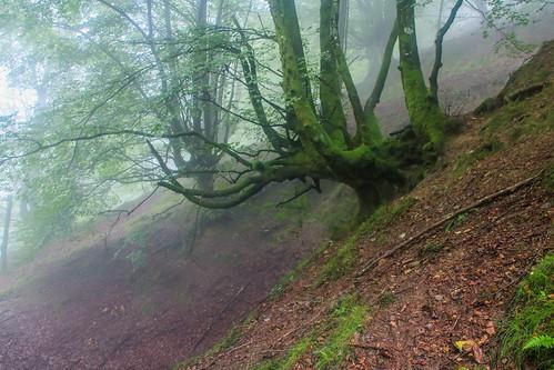 Parque Natural de #Gorbeia #DePaseoConLarri #Flickr - -860