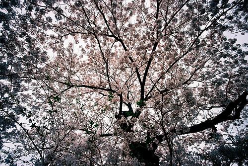 inside springtime