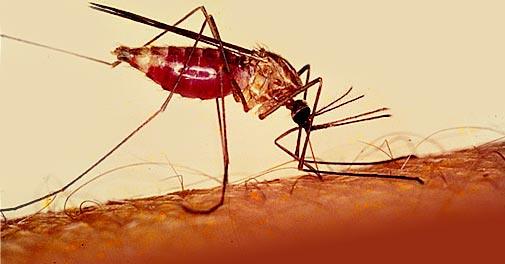 Obat malaria di apotik