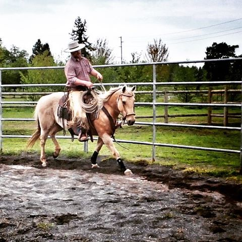#tbt to when my horse was actually fit and active and travelling halfway decently because I hadn't let her sit and eat all frigging year.