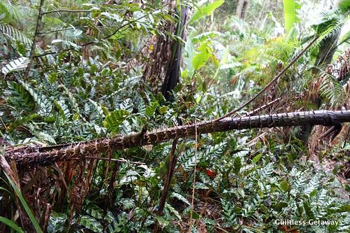 binahon-forest.jpg