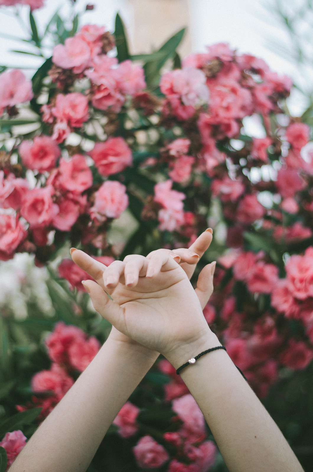 rose hands