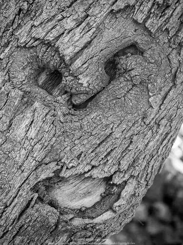 Grito de dolor de un árbol
