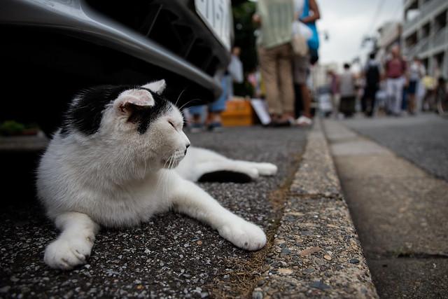 Tokyo Cats