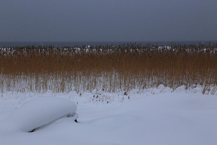 Lahemaa talvi