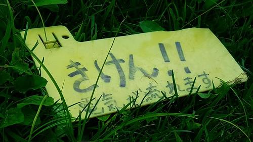 16-07-28-13-12-24-413_photo