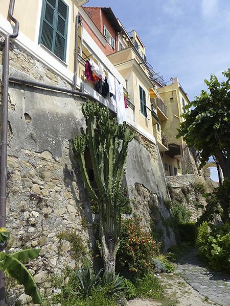grand cactus le long d'un mur
