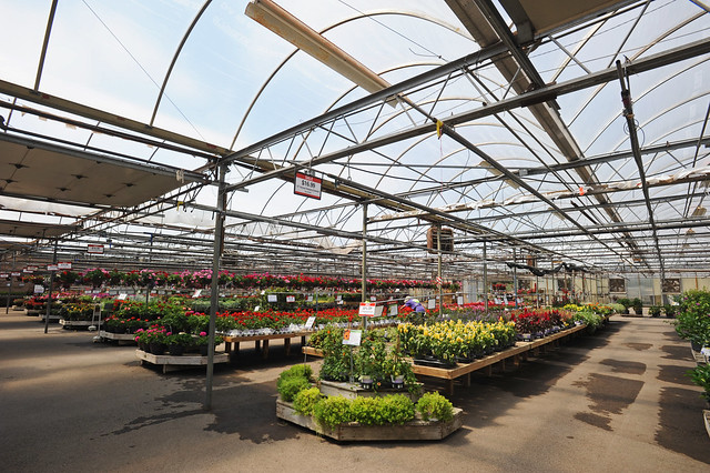 Bachman's greenhouse