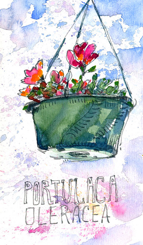 Sketchbook #100: Report from my Patio