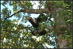 le corbeau de la fable