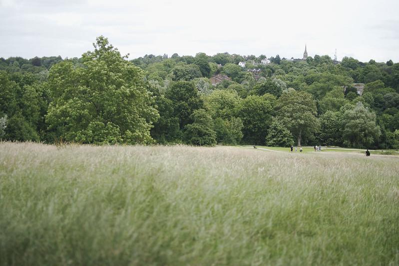 hampstead heath 7