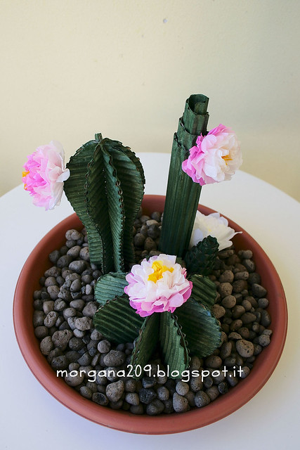 Cactus_03w