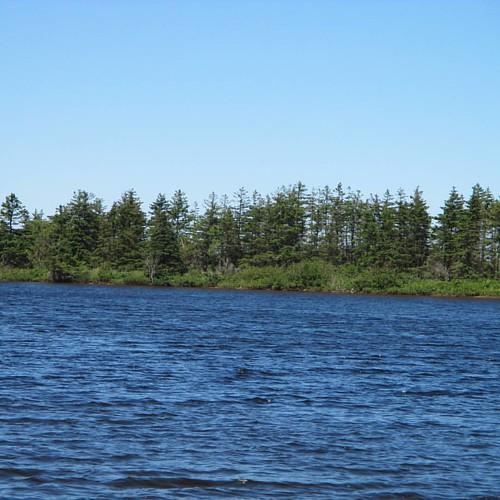 Far shores #pei #dalvay #peinationalpark #dalvaylake #dalvaybythesea #latergram #trees