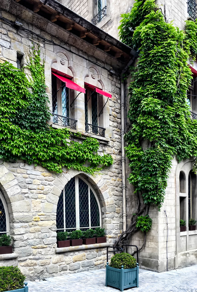 Ivy Wall and Window.jpg