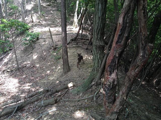 不破の滝 展望台奥 バンビ遠