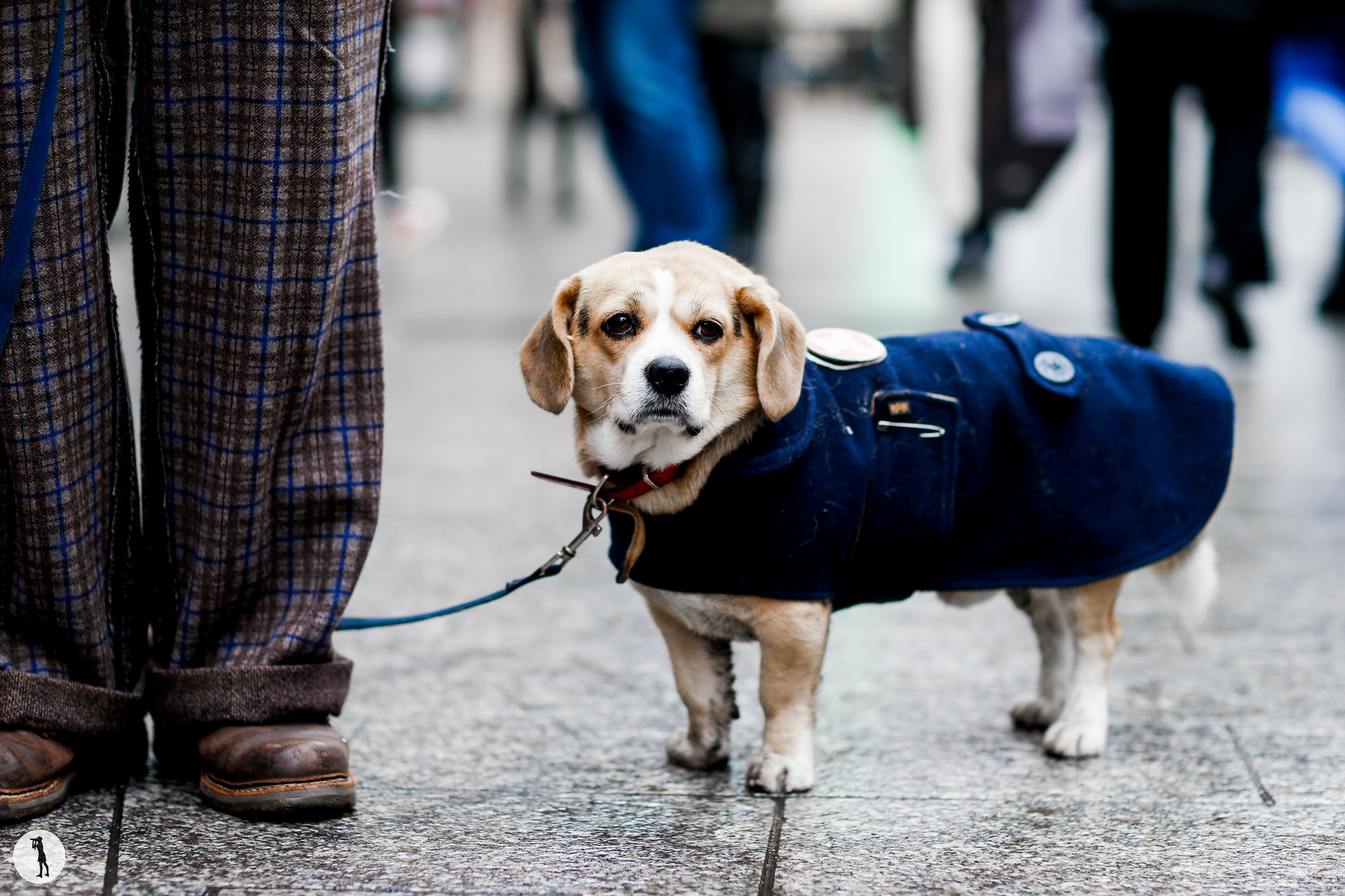 Dog at Paris Fashion Week Menswear