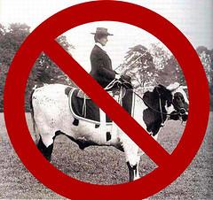 No Cow Riding