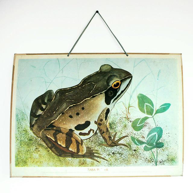 Vintage frog poster