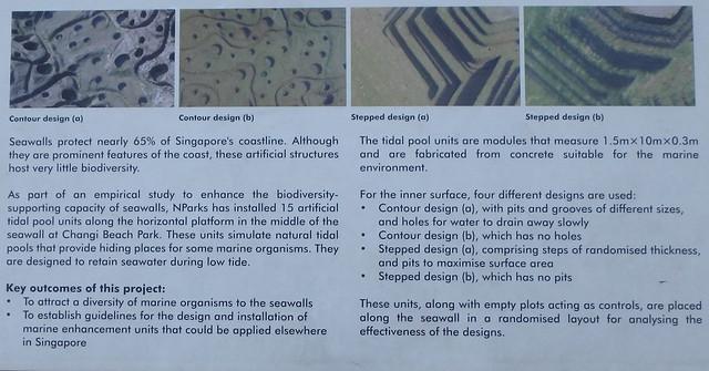 Tidal Pool Units for Habitat Enhancement on Seawalls at Changi