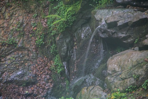 Parque Natural de #Gorbeia #DePaseoConLarri #Flickr - -869