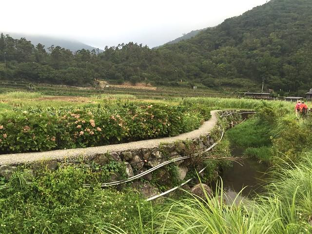 竹子湖2016071706點 (18)